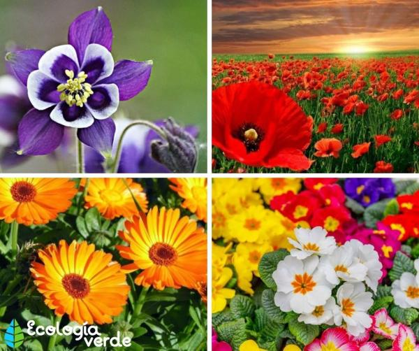 22 flores de primavera