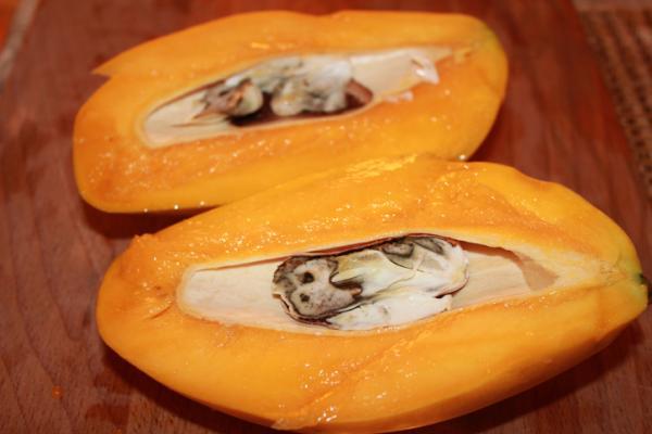 Germinar y plantar un mango: cómo y cuándo hacerlo - Cómo germinar un mango