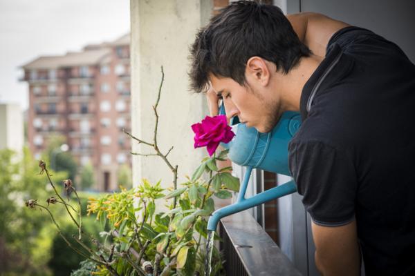 Cuándo regar las plantas