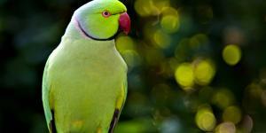 Nombres de las aves exóticas del mundo