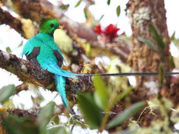 Nombres de las aves exóticas del mundo - Nombres de las aves exóticas del mundo - lista