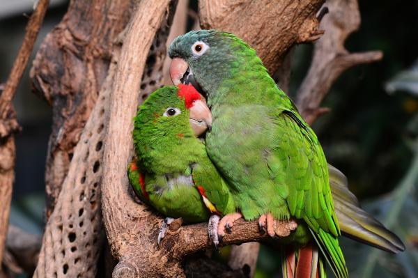 Nombres de las aves exóticas del mundo - Qué son las aves exóticas