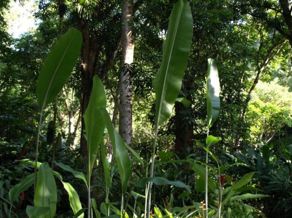 Las ecorregiones del Perú y sus características - Bosque tropical del Pacífico