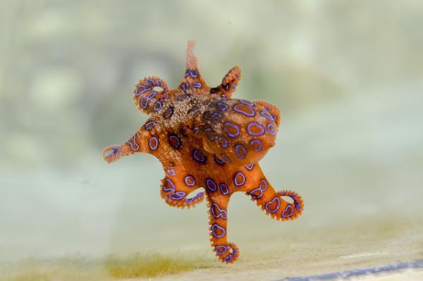 Los 10 animales más raros de Australia