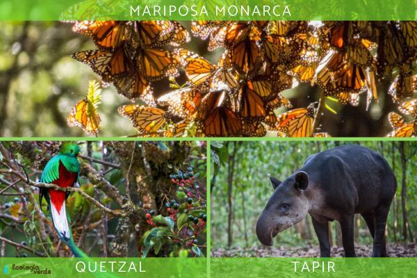Flora y fauna de México - Fauna de México