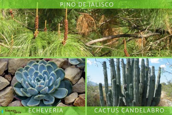 Flora y fauna de México - Flora de México