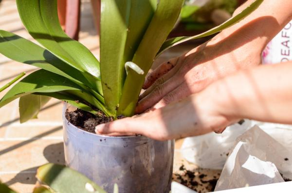 Orquídeas con hojas amarillas: causas y cómo curarlas - Orquídeas con hojas amarilla causadas por un mal uso del fertilizante