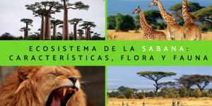 Ecosistema de la sabana: características, flora y fauna