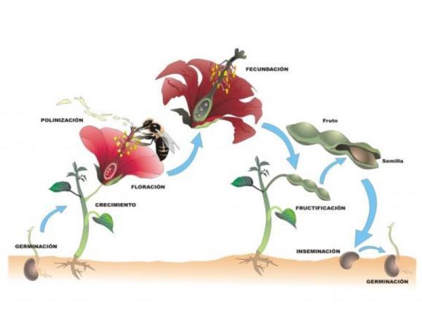 Reproducción de las plantas - Reproducción de las plantas con flores