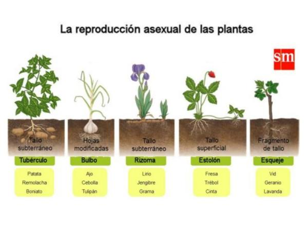 Reproducción de las plantas - Tipos de reproducción de las plantas
