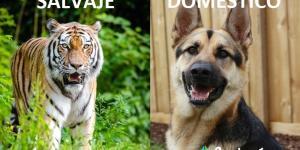 Características de los animales salvajes y domésticos