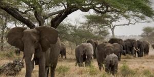 Dónde viven los elefantes y de qué se alimentan