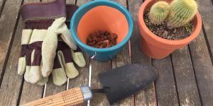 Trasplantar un cactus: cómo y cuándo hacerlo