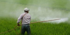 Agrotóxicos: qué son, tipos y uso