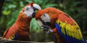 Características y factores de riesgo de la biodiversidad en México