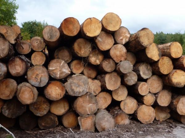 Recursos forestales: qué son, tipos y ejemplos - Importancia de los recursos forestales