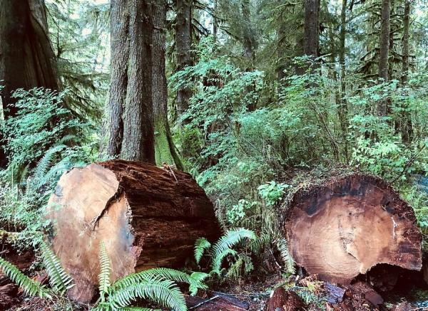 Recursos forestales: qué son, tipos y ejemplos