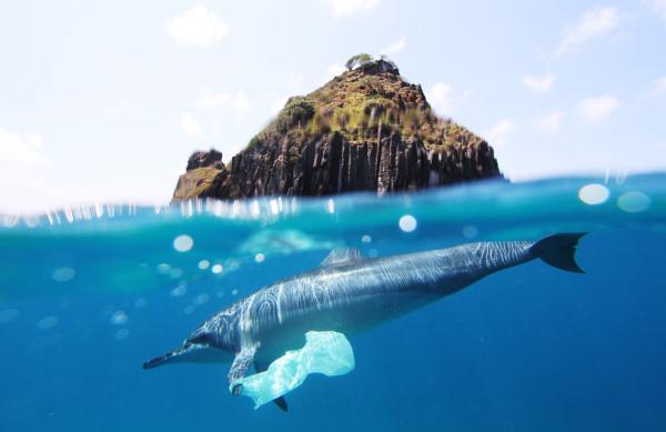 Cómo hacer plástico biodegradable con maicena - Por qué buscar alternativas al plástico