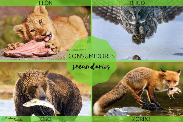 Consumidores secundarios: qué son y ejemplos