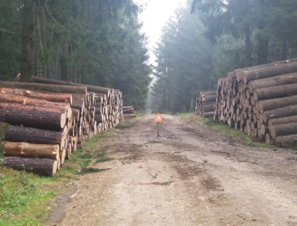 Problemas ambientales en el Ecuador - Deforestación en el Ecuador