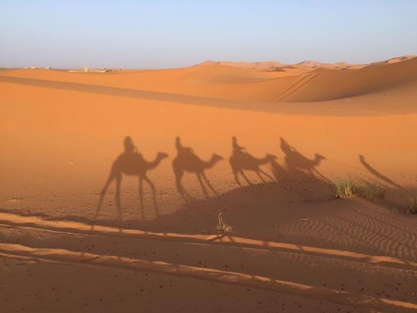Factores bióticos y abióticos del desierto - Desierto del Sahara