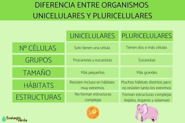 ¿Las plantas son unicelulares o pluricelulares? - Diferencias entre organismos unicelulares y pluricelulares