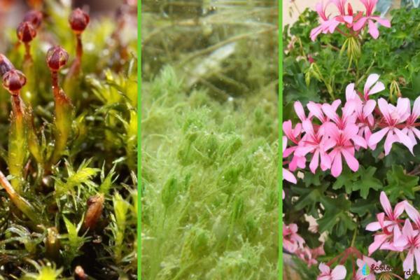 ¿Las plantas son unicelulares o pluricelulares? - Ejemplos de plantas unicelulares y pluricelulares