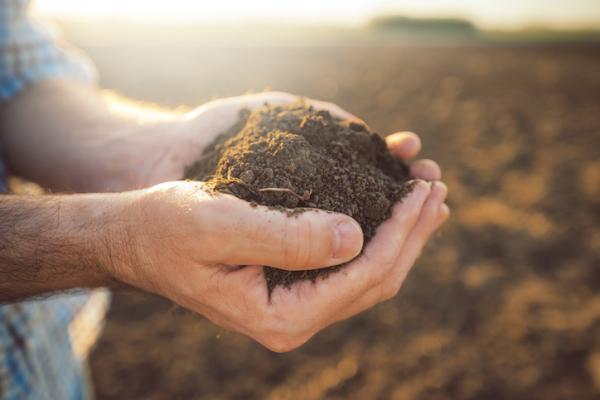 Tipos de suelos y sus principales características - Tipos de suelos y sus características