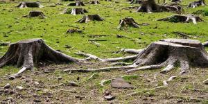El problema de la tala indiscriminada de árboles en los bosques