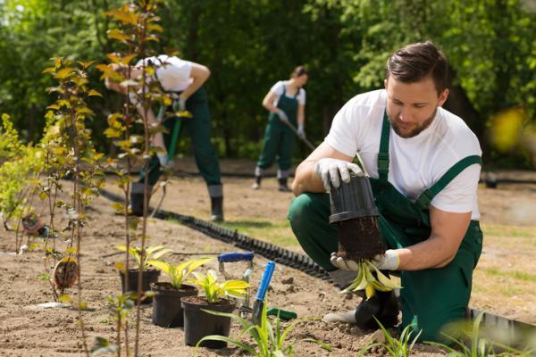 Qué es la horticultura - Consejos básicos de horticultura