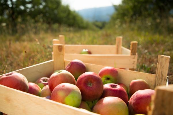 Qué es permacultura: ventajas y desventajas - Qué es la permacultura