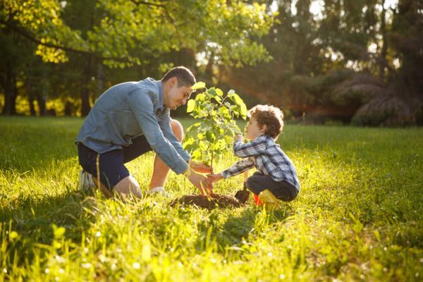Cómo reducir mi huella de carbono - Cómo reducir el dióxido de carbono plantando árboles