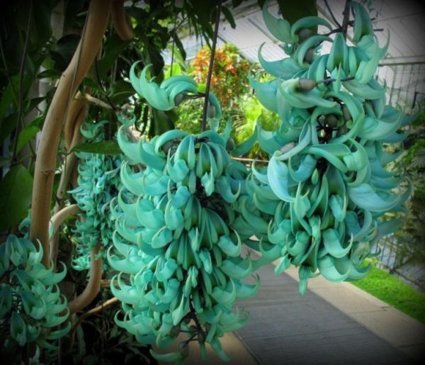 Nombres de las flores más exóticas del mundo