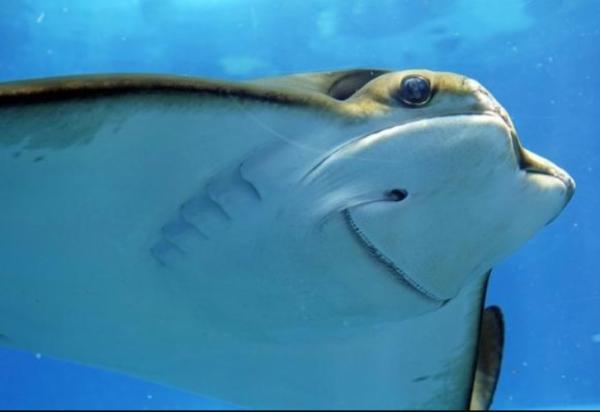 Cómo respiran los peces - Por dónde respiran los peces