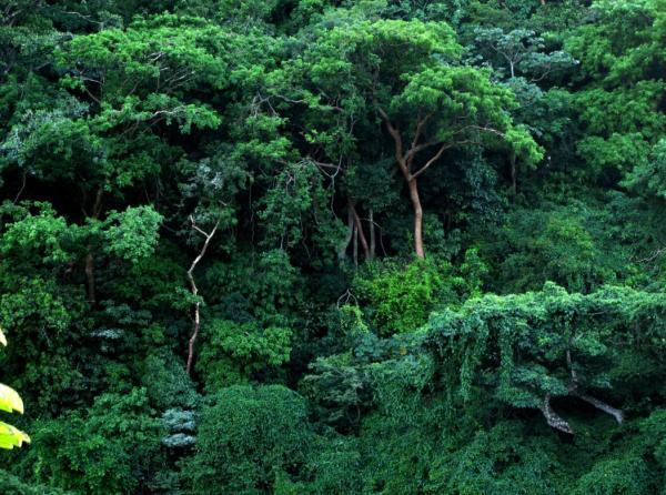 Recursos naturales de Veracruz - Recursos forestales