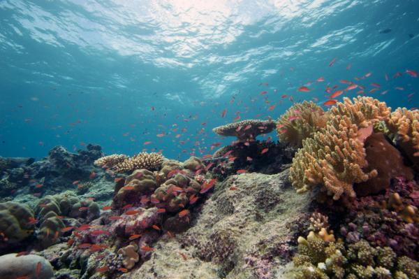 Tipos de biomas marinos - Biomas marinos de arrecifes coralinos tropicales
