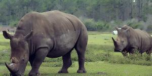 Animales en peligro de extinción en África