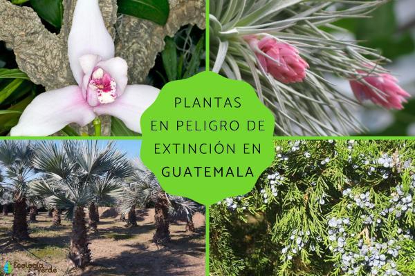 Plantas en peligro de extinción en Guatemala