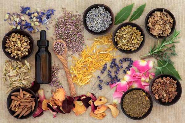 La importancia de las plantas - Importancia de las plantas medicinales
