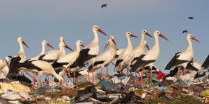 Destrucción del medio ambiente y el hábitat: causas y consecuencias