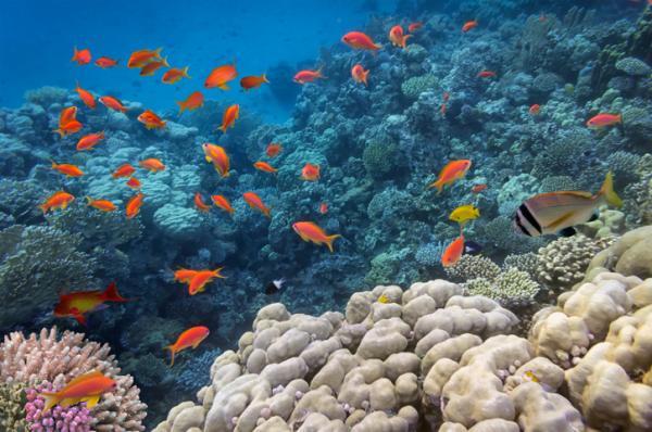 Destrucción del medio ambiente y el hábitat: causas y consecuencias - Qué es el medio ambiente y el hábitat