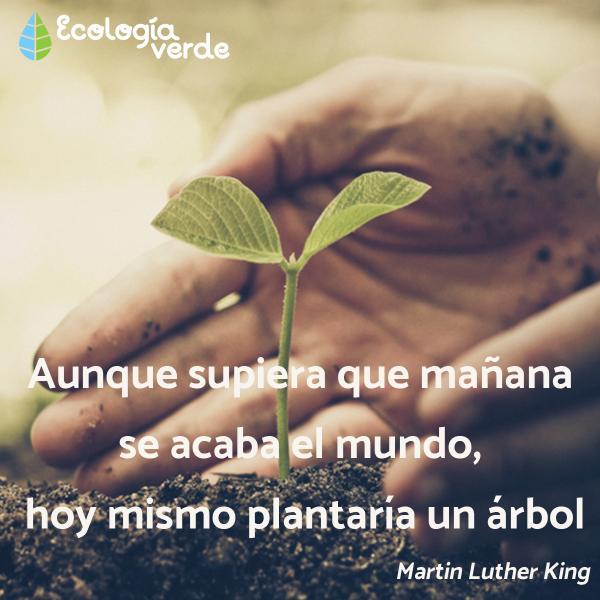 Frases sobre el medio ambiente para niños - Frases sobre el medio ambiente para niños
