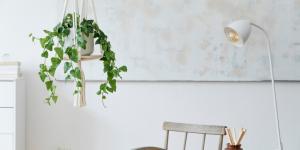 29 plantas colgantes de interior