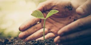 Cómo hacer abono orgánico casero para plantas