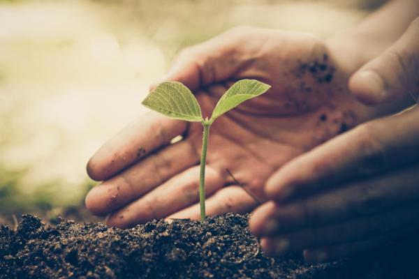 C mo hacer abono org nico casero para plantas f cil y - Abono organico para plantas ...