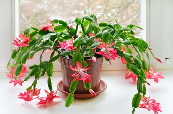 29 plantas colgantes de interior - Plantas suculentas colgantes para decorar interiores