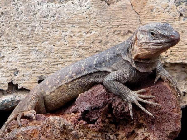 Diferencia entre reptiles y anfibios para niños
