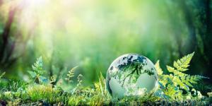 Por qué se celebra el Día Mundial del Medio Ambiente