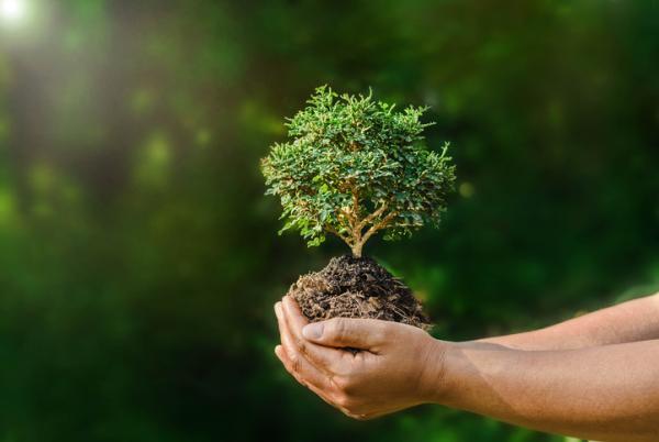 Por qué se celebra el Día Mundial del Medio Ambiente - Qué es el Día Mundial del Medio Ambiente