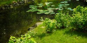 Cómo limpiar el agua verde de un estanque